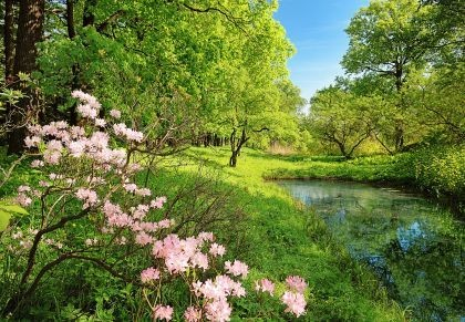 Drzewa_kwiaty_fototapeta